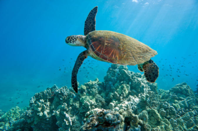 Kahului Shore Excursion: Snorkeling Adventure on Maui