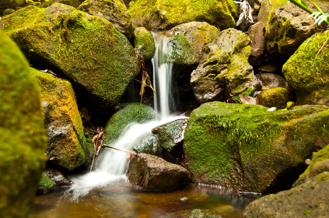 Manoa Waterfall Small Group Adventure on Oahu