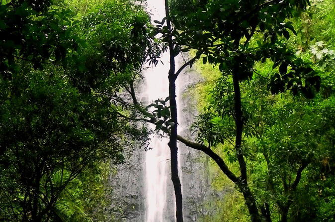 Rainforest Waterfall Excursion on Oahu