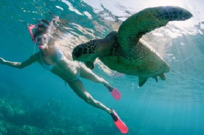 Sea Turtle and Dolphin Snorkeling on Oahu