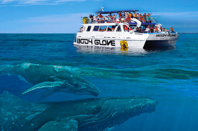 Whale Watch Excursion From The Big Island on Hawaii