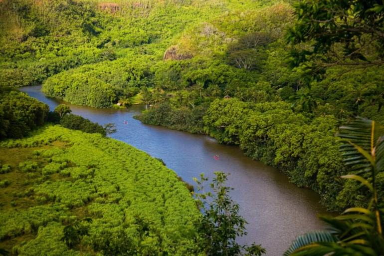 The Ultimate Guide to Birding on Kauai featured by top Hawaii travel blog, Hawaii Travel with Kids: Wailua River Valley is a great Kauai birding spot