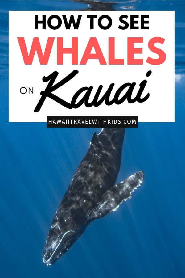 The Best Kauai Whale Watching Tours featured by top Hawaii blog, Hawaii Travel with Kids