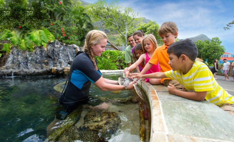 Sea Life Park in Oahu review featured by top Hawaii blog, Hawaii Travel with Kids: Animal encounter at Sea Life Park on Oahu