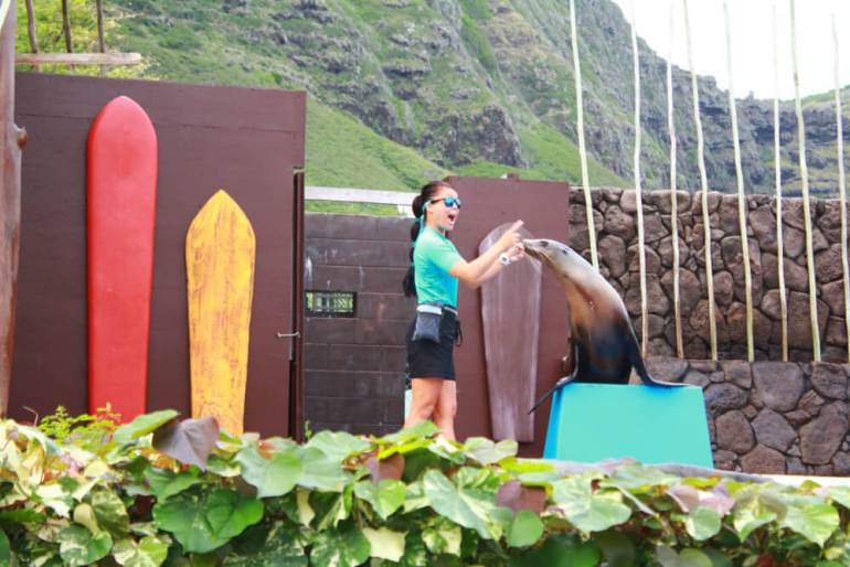 Sea Life Park in Oahu review featured by top Hawaii blog, Hawaii Travel with Kids: Sea Life Park is a top thing to do on Oahu with kids