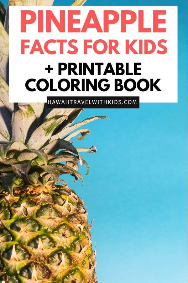 Pineapple Facts for Kids + FREE Printable featured by top Hawaii blog, Hawaii Travel with Kids.