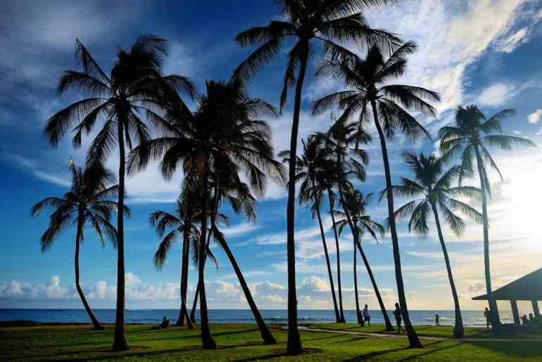 One of the coolest facts about Hawaii for kids is that no building on Kauai can be taller than a palm tree. Image of Sunrise with palm trees in Salt Pond Beach Park on Kauai, Hawaii