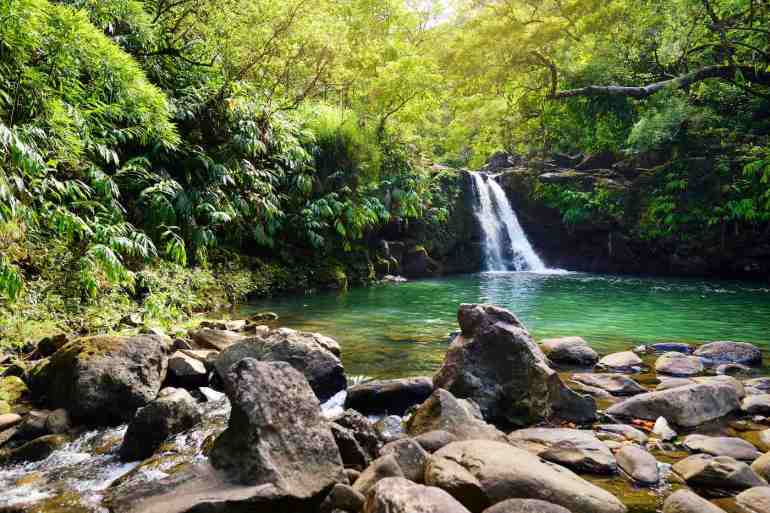 Waikamoi Falls is one of the best kid-friendly Road to Hana stops. Image of Lower Waikamoi Falls and a small crystal clear pond, inside of a dense tropical rainforest, off the Road to Hana Highway, Maui, Hawaii, USA