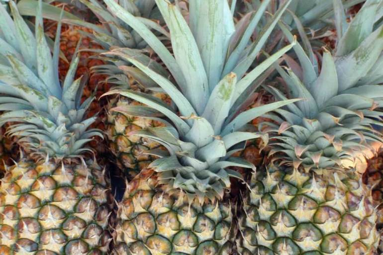 One of the best things to do on the Big Island is visit a farmers market. Image of a bunch of pineapples in Hawaii.