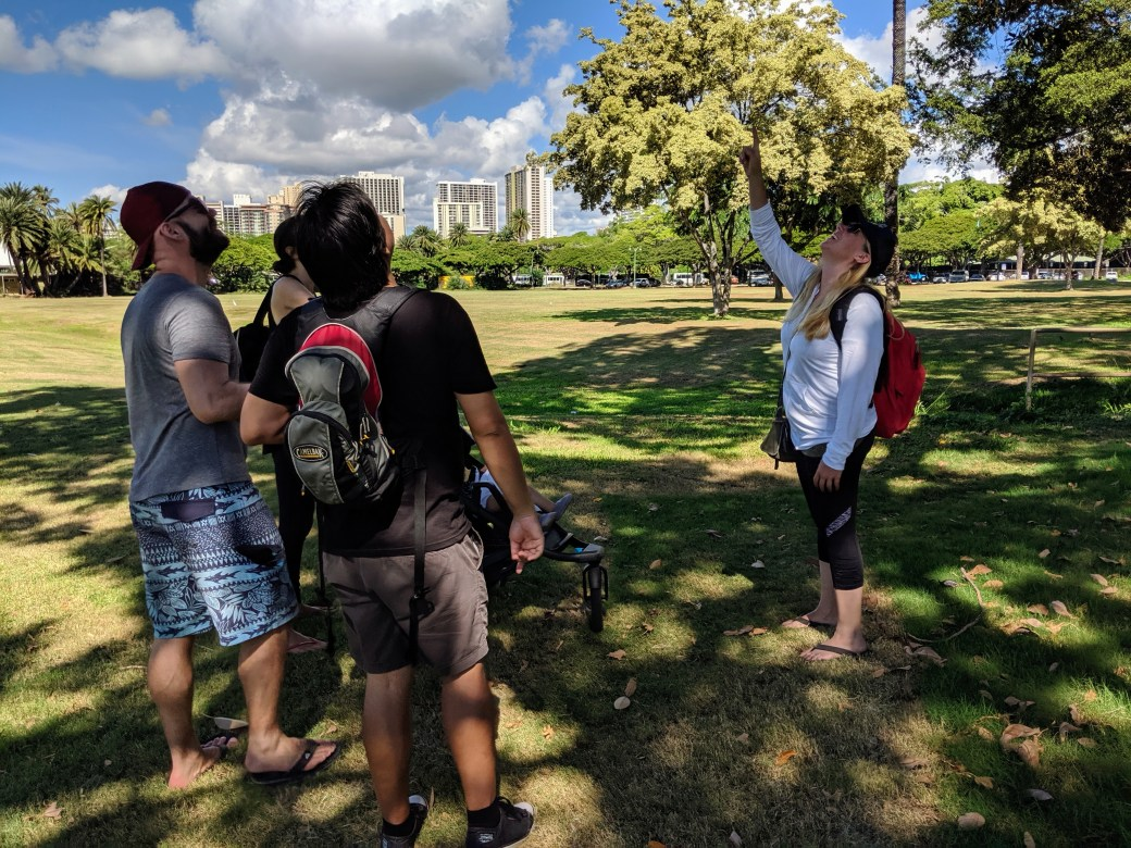 Hawaii Walks Guide shows Guests birds in trees above