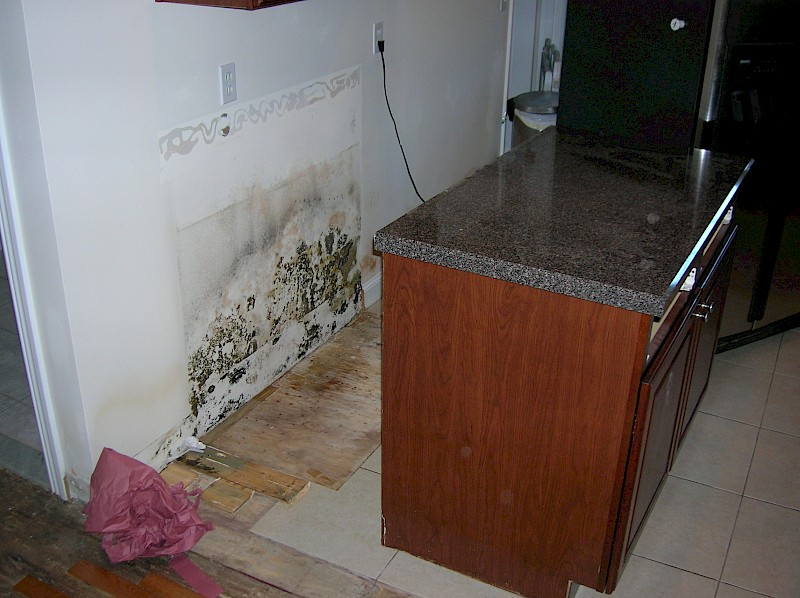 Black Mold Under Kitchen Cabinet