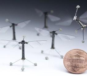 abeja drone