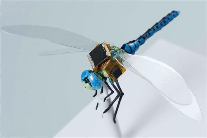 Libélulas drones