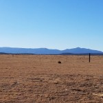 80 Acre NM Prairie Land