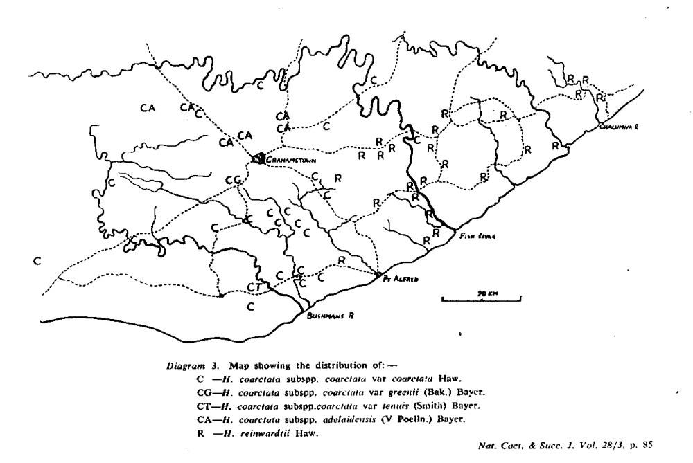 Diagram 3. Map showing the distribution of:- C - H. coarctata subspp. coarctata var coarctata Haw. CG - H. coarctata subspp. coarctata var greenii (Bak.) Bayer. CT - H. coartata subspp. coarctata var tenuis (Smith) Bayer. CA - H. coarctata subspp. adelaidensis (V Podia.) Bayer. R - H. reinwardtii Haw.