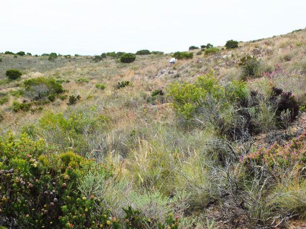 13.21 View overlooking habitat 7496.