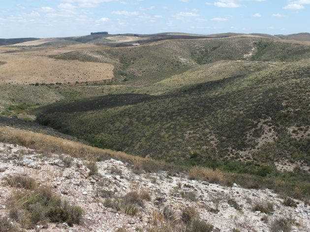 Fig. 103 7966 Spitzkop West