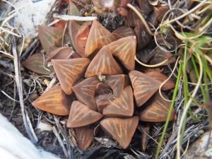 Fig. 113 7967 Spitzkop (quartz rock)