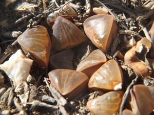 Fig. 124 7967 Spitzkop (quartz rock)