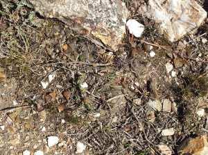 Fig. 142 7967 Spitzkop (quartz rock)
