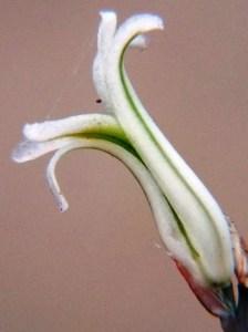 4461.1a H. mirabilis notabilis, Buitenstekloof