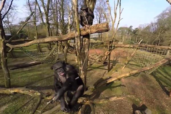 Nng chimp 20150425