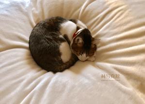 一休み | 猫