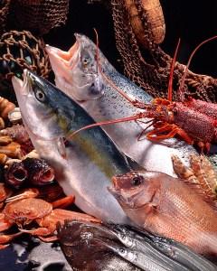 鮮魚_フード・料理写真撮影