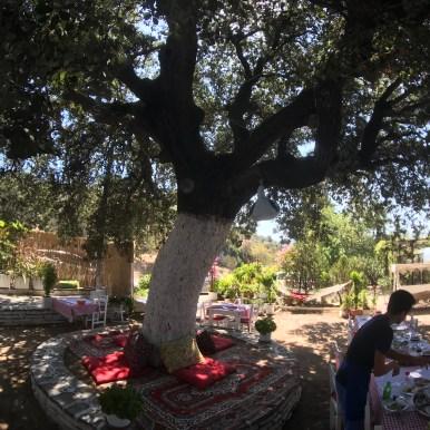 Seval'in Yeri Pinar Ağacı