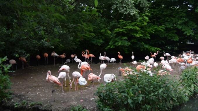 Münih Hayvanat Bahçesi