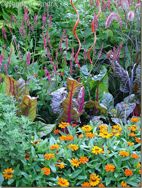 Chard Bright Lights Zinnia Profusion Orange Persicaria Taurus July 25 08