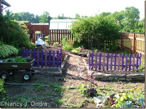 Happy Garden in progress June 15 2010