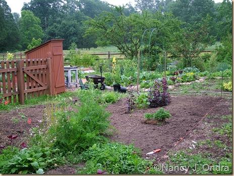 Happy Garden in progress June 12 2010