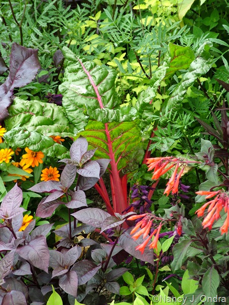 Chard 'Bright Lights' with Fuchsia 'Gartenmeister', Alternanthera 'Purple Knight', and Zinnia 'Profusion Orange' mid-July 2010