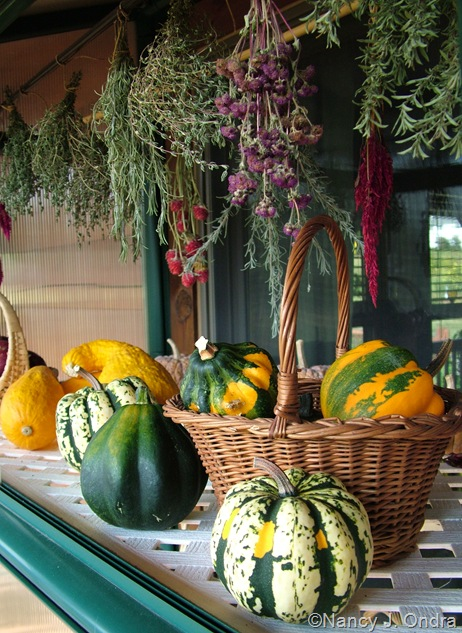 Herbs and squash harvest Sept 14 10
