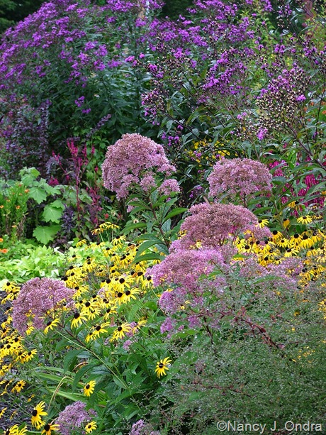 Eupatorium maculatum with Rudbeckia fulgida and Vernonia