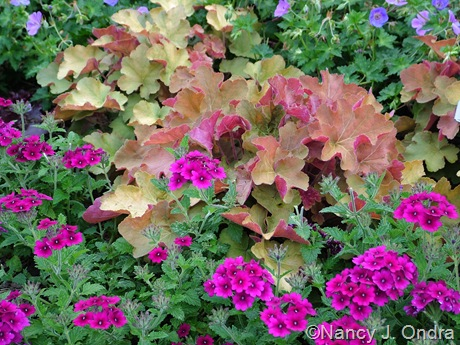 Heuchera 'Caramel' with Verbena 'Superbena Burgundy'