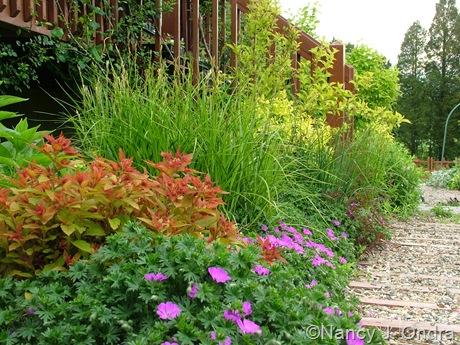 Spiraea Magic Carpet ('Walbuma') with Geranium sanguineum 'New Hampshire Purple' and Carex muskingumensis 'Oehme'