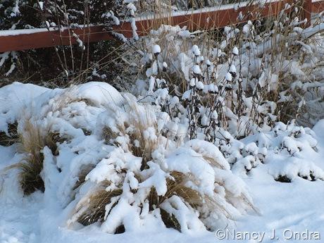 Stipa tenuissima in snow