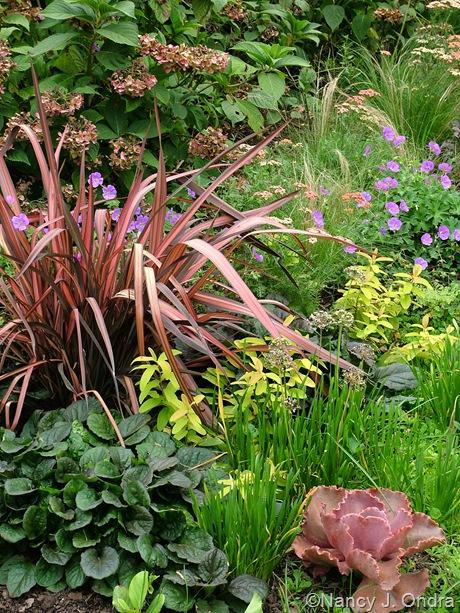 Phormium ('Pink Stripe'?) with Ajuga 'Catlin's Giant', Hypericum 'Brigadoon', Geranium 'Brookside', and Allium cernuum
