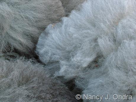 Alpaca fleece from Daniel and Duncan at Hayefield