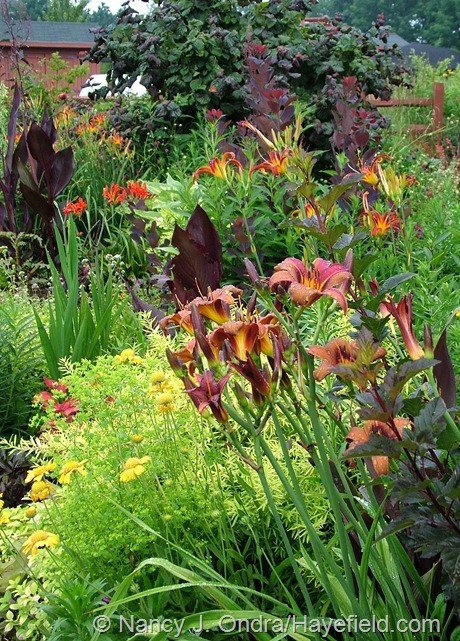 Front garden at Hayefield with Hemerocallis 'Milk Chocolate' and 'Nona's Garden Spider'