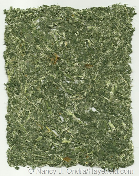 """Paper"" made from Hosta fortunei foliage (no pulp)"