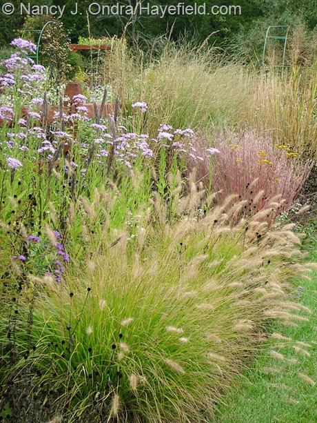 'Cassian' fountain grass (Pennisetum alopecuroides), Tatarian aster (Aster tataricus), 'The Blues' little bluestem (Schizachyrium scoparium), and 'Dewey Blue' bitter switch grass (Panicum amarum) at Hayefield