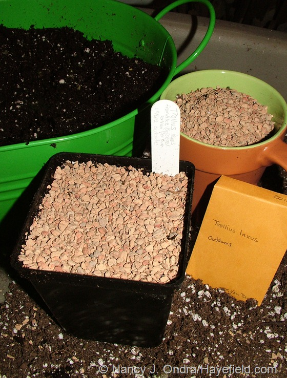 Seeds sown for outdoor treatment at Hayefield