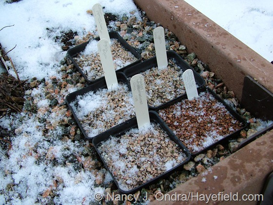Seed pots outdoors at Hayefield