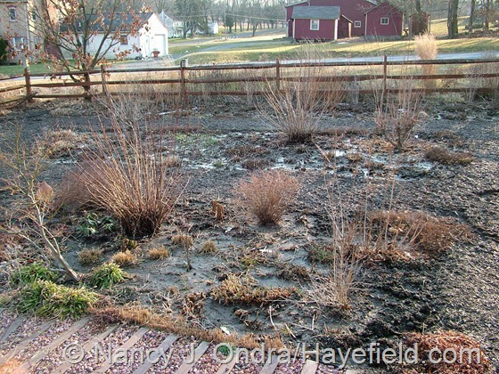 Front garden at Hayefield.com - early March 2013