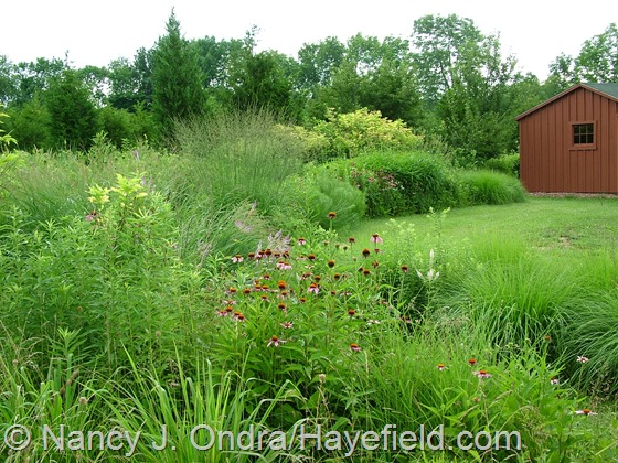 Meadow and Arc Borders at Hayefield.com