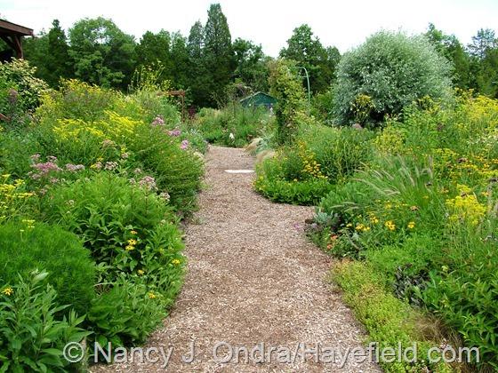Side Garden: September 5, 2013 at Hayefield.com