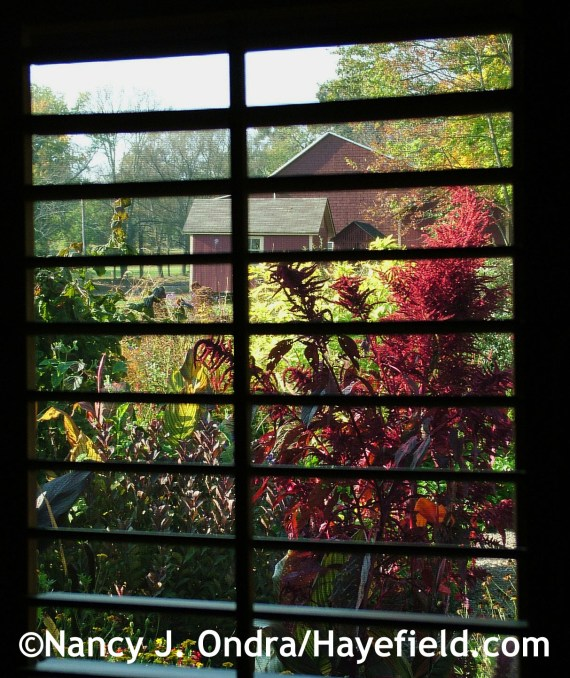 The inside view of the front garden with Amaranthus 'Hopi Red Dye' at Hayefield.com